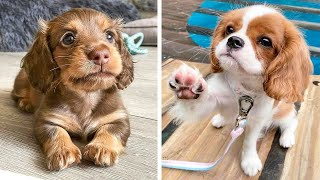 OMG CUTE BABY ANIMALS Videos Compilation CUTEST moment of the animals  Cute Puppies #11