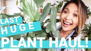 HUGE PLANT HAUL 2018 (LAST!)