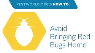 How to Prevent Hitchhiking Bed Bugs