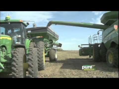 Pure NE  CG Dawn C Agri Business