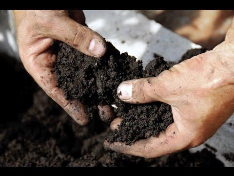 Как приготовить почву для клубники