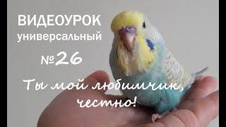 """🎧 Учим попугая говорить. Урок № 26: """"Ты мой любимчик, честно!"""""""
