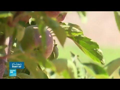 وقف الصادرات الزراعية اللبنانية إلى السعودية يعمق أزمة القطاع  - 16:00-2021 / 5 / 4