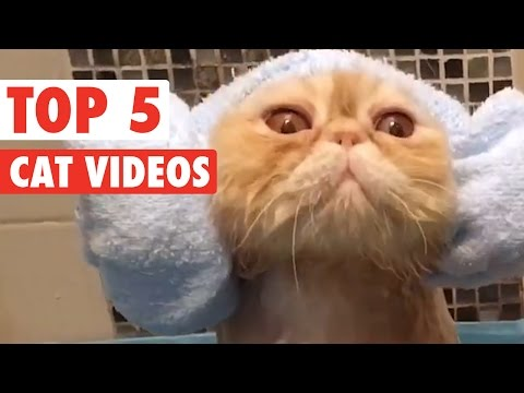 Best of the Week Cats Compilation || March 11 2016