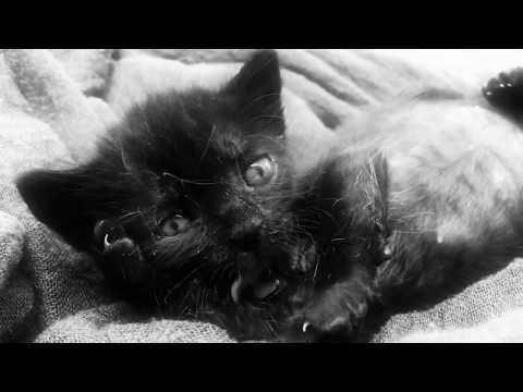 Youtube: Anton Serra – Confortable ( prod: Oster Lapwass )