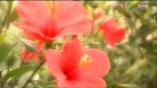 かりゆし58 - 恋人よ