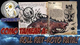 COMO TAMEAR A ROLL RAT-ROTO RATA