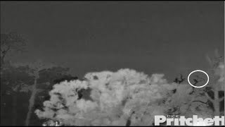 SWFL Eagles ~ An Owl Knocks E15 Off The Cam 2 Tree! Slomo! 7.13.20
