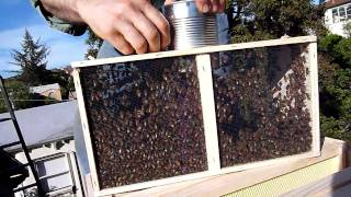 How To Populate A New Beehive