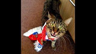 ПОДБОРКА ЛУЧШИХ МОМЕНТОВ 2016 СМЕШНЫЕ КОТЫ! СМЕШНЫЕ КОТИКИ (CatsLIVE)