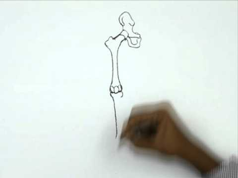 How To Draw A Human Bone Leg Youtube