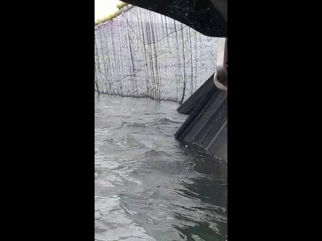 Gremios sindicales de pescadores denuncian masacre de Anchoveta peladilla en el sur