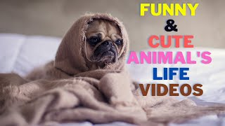 New Funny and Cute Animals (Pets) - Try Not To Laugh!    FunMaza