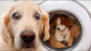 🤣 Funniest Dogs 🐶 And Cats 😻 Videos - 😹 Try Not To Laugh Pets - Animals From Tik Tok