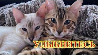 Приколы с котами| Добрый позитив| Видео про котов| Кошки|Про Животных|Создай себе хорошее настроение