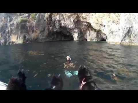 4 Schipperkes explore sea caves on Linapacan