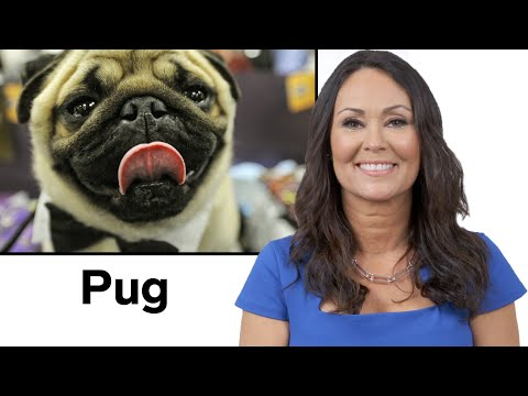 Every Dog Breed Explained (Part 2) | WIRED