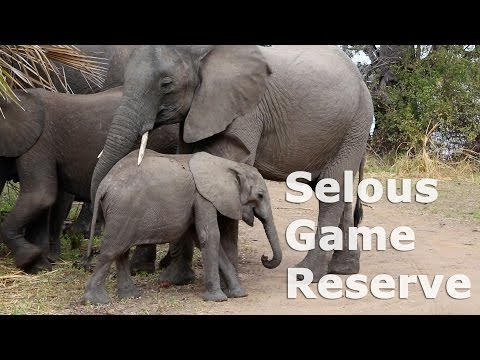 Selous Game Reserve - Safari [Tanzania 2013]