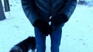 видео пружинная дубинка
