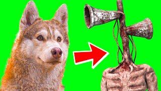 БУБЛИК ПРЕВРАТИЛСЯ В СИРЕНОГОЛОВОГО!! (Хаски Бандит) Говорящая собака