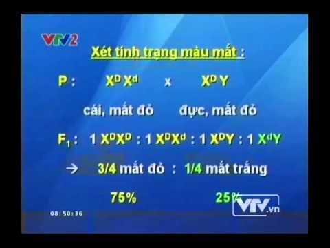 Bài tập tổng hợp các quy luật di truyền - BTKTVH  - Sinh học - Bài 19