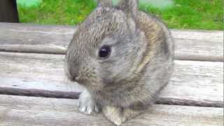Эти забавные животные - крольчата, маленькие кролики(Эти забавные мальнькие кролики бегают скамейке, где я на видео сижу, беру их на свои колени. Этим маленьким..., 2013-03-22T23:46:17.000Z)