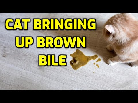 Why Is My Cat Vomiting A Brown Liquid?