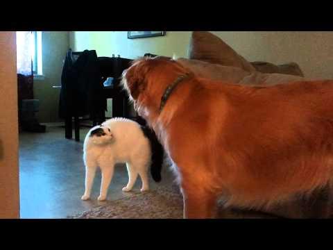 Caesar the talking cat is pissed