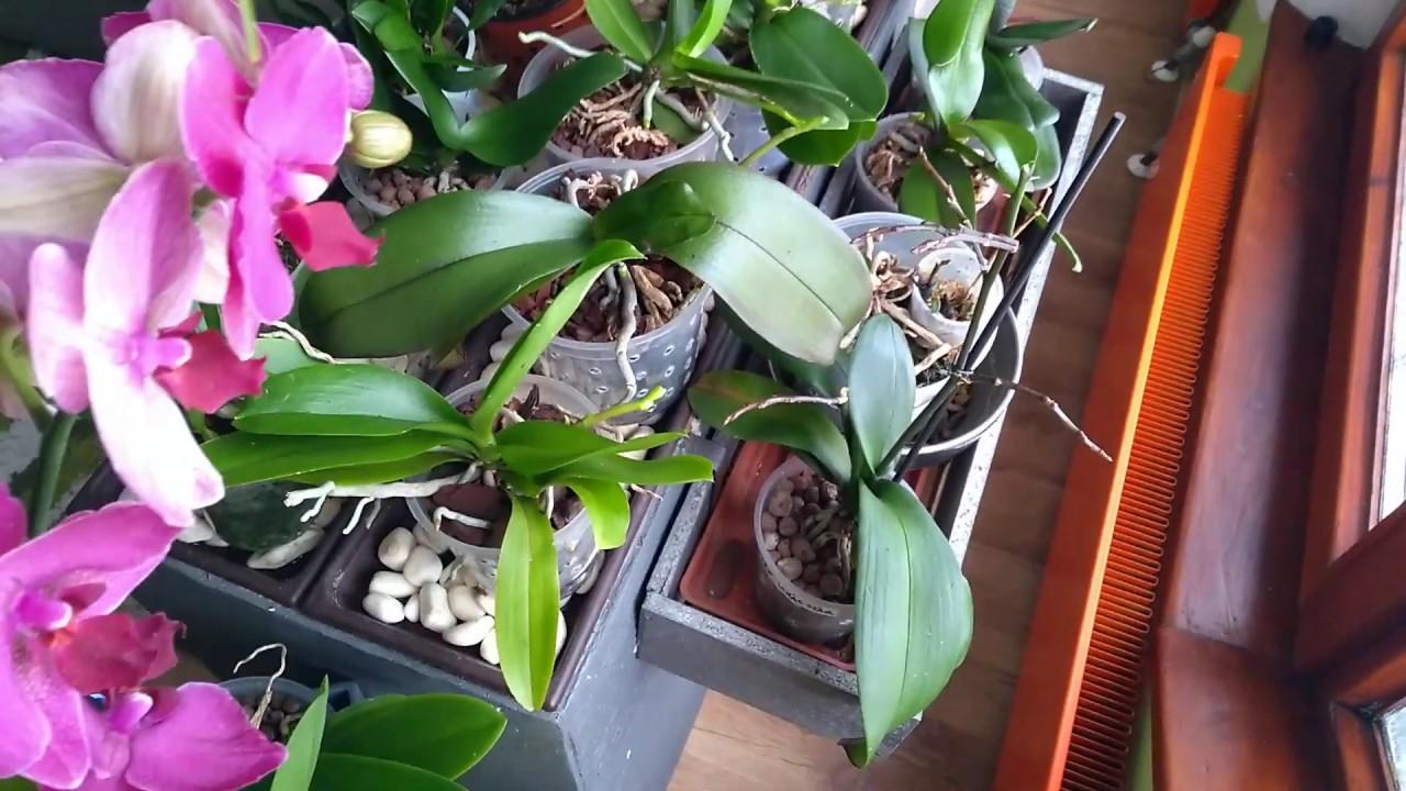 Download Milyen közegben tarthatok Orchideát?
