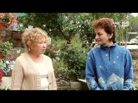 видео: Зимостойкие садовые растения. Сайт