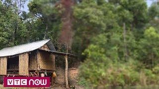 Quảng Trị: Người dân tự lập lán giữ rừng