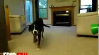 Эффект от вувузела у собак! ХД