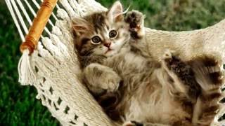 Слайд шоу про котят, котов и кошечек. Фото милых животных)
