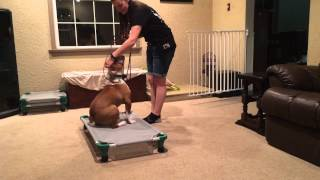 How To Teach Your Dog To Stay On A Dog Bed Or Place
