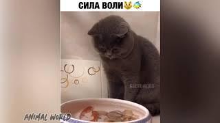 Смешные животные / Прикольные видео с собаками, кошками, птицами