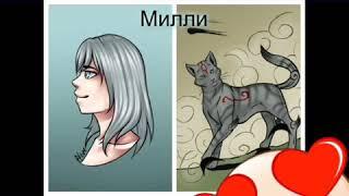 Коты воители в виде людей
