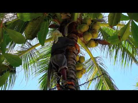 Fresh Buko Juice - Bohol Tours - WOW Philippines Travel Agency
