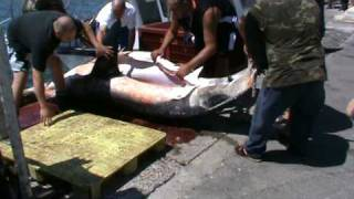 requin blanc pecher a marseille 28 07 09
