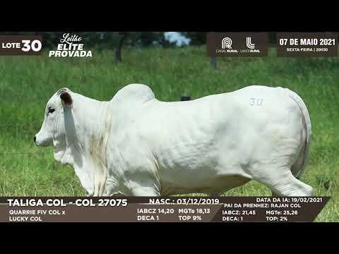 LOTE 30   COL 27075