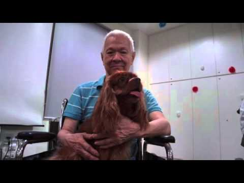 Therapy Dogs Singapore AVP
