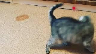 Пробка и кошка