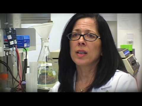 Dr. Jaffee's Mission to Fight Pancreatic Cancer