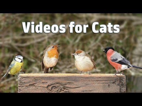 Video for Cats - My Garden Birds in December  NEW ✔️