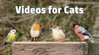 Video for Cats - My Garden Birds in Dece...