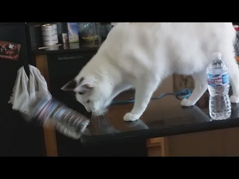 Jerk Cat Knocking Stuff Over compilation.