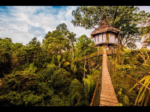 Treehouse Jungle Lodge in Peru | Rainforest Cruises