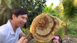 Hái trái cây, bắt tổ ong vườn trái cây Miền Tây | Ly Hai Minh Ha Family
