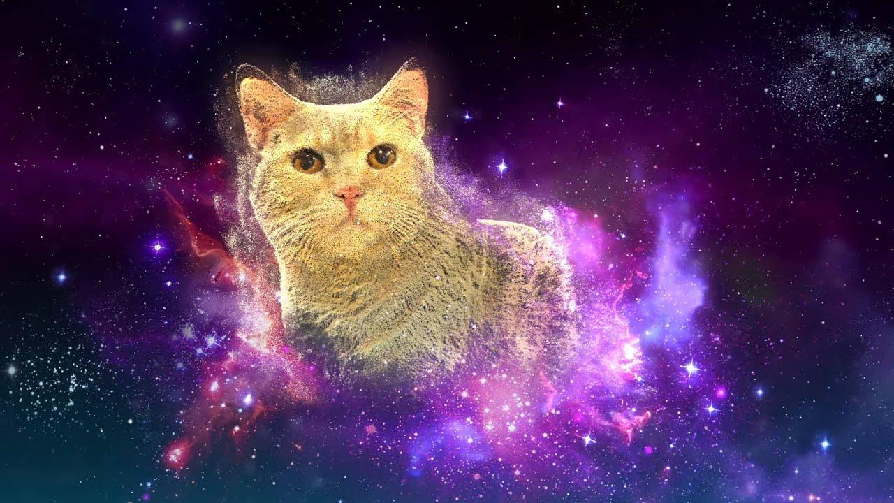 Nebula Cat Gallery