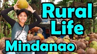 Rural Life in Philippines (Coconut Harvesting in Mindanao)