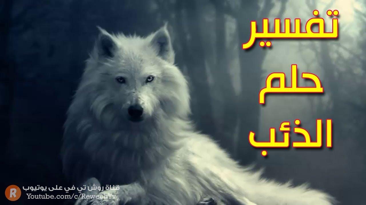 تفسير حلم الذئب - ما معنى رؤية الذئب في الحلم ؟ - سلسلة تفسير الأحلام